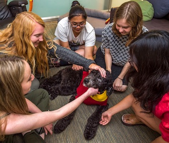 Students at USC are making fast friends with the school's full-time facility dog, Professor Tirebiter.