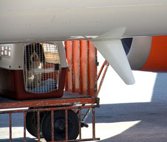 Dog being loaded onto a plane