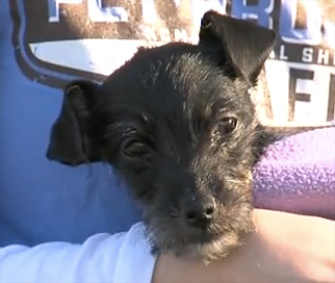 Kia survived for a month in an abandoned car in Missouri.