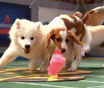 Animal Planet aired its 10th Puppy Bowl on Sunday.