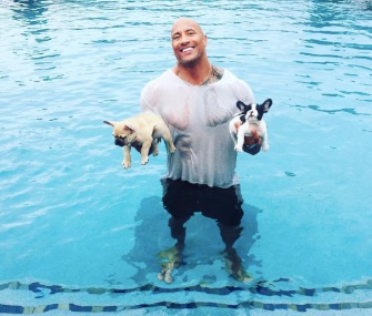 Dwayne Johnson, aka The Rock, rescued his puppies, Brutus, left, and Hobbs, right, from his pool over the Labor Day weekend.