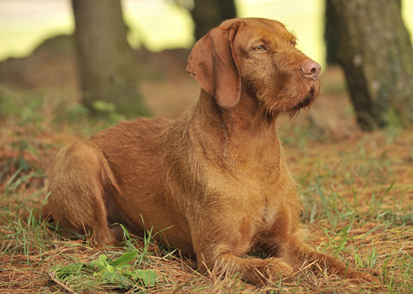 14 Dog Breeds You Ve Never Heard Of But Will Soon