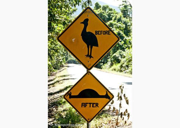 8 eyebrow raising animal crossing signs from around the world