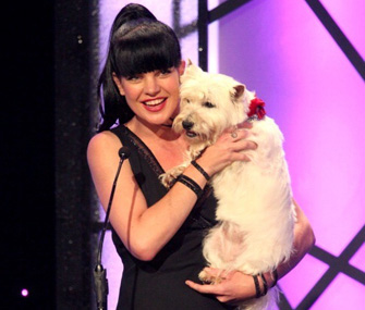 Actress Pauley Perrette at American Hero Dog Award Show