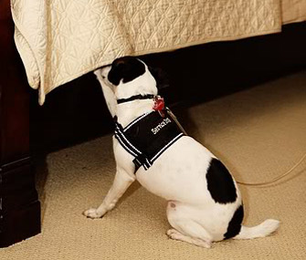 Marlowe the dog sniffs for bedbugs