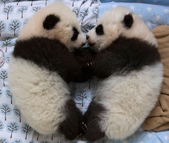 Zoo Atlanta announced Monday its 100-day-old cubs will be named Ya Lun and Xi Lun.
