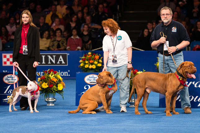 Vivian Peyton at the National Dog Show