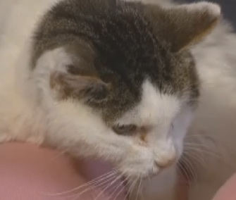Ralph was reunited with his owners in Iowa after being missing for 14 years.