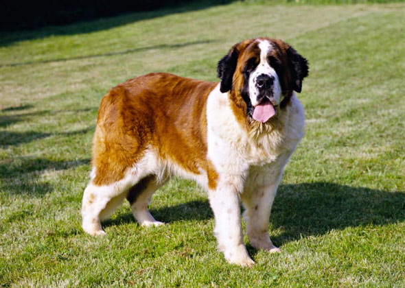 How To Breed Dogs In Copious Dogs