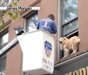 A firefighter rescued a dog from a second-story window ledge in Brooklyn.