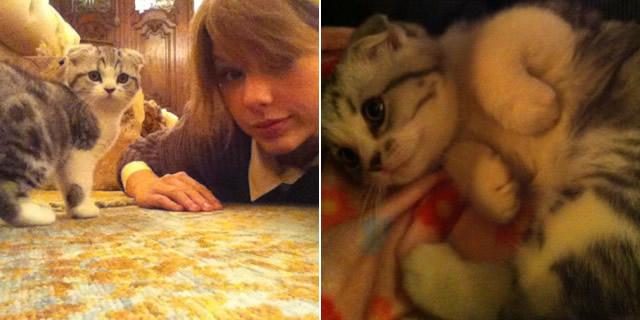 Taylor Swift Buys Scottish Fold Kitten