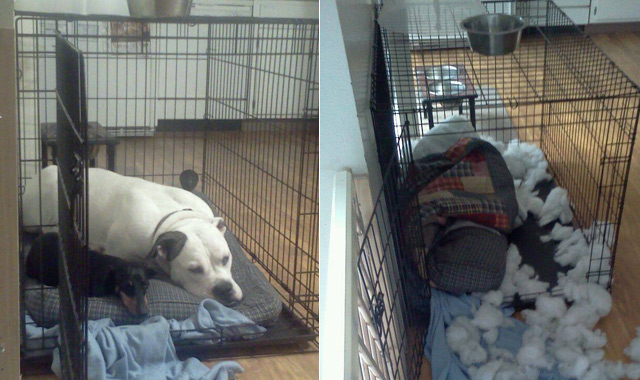 Before and after destroyed crate bedding