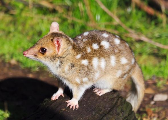 Weird Animals Of Australia 8