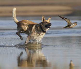 Dog chasing bird