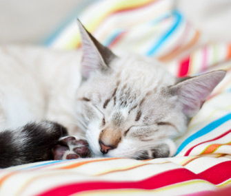 Your Kitten: What to Expect at 7-9 Months