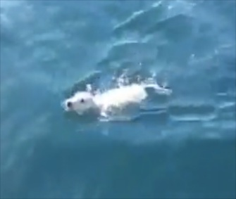 A sailing crew rescued Noodles the puppy from waters off the coast of Naples, Italy.