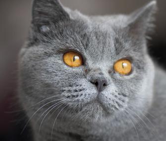 Portrait of a cat's face