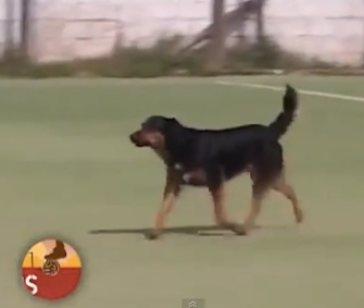 A dog walked onto a soccer field in Argentina, and scored a goal.