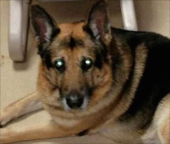 Bela will get a new home at Best Friends Animal Society in Utah just in time for Christmas.