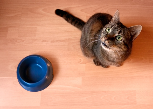 7 ways you 39 re feeding your cat wrong photo gallery. Black Bedroom Furniture Sets. Home Design Ideas