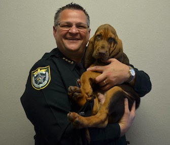 Brevard County, Florida, Sheriff Wayne Ivey holds the agency's new Bloodhound puppy.