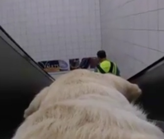 Kika, a London guide dog, shows the world from her perspective in a new GoPro video.
