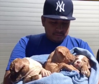 Firefighters in Oklahoma City saved six puppies from a hole under a house.