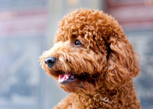 hot dog the most trendy male and female dog names of the year