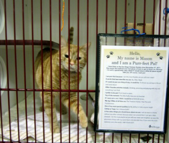 This orange tabby named Mason is outgoing and looking to be adopted at the San Diego Humane Society