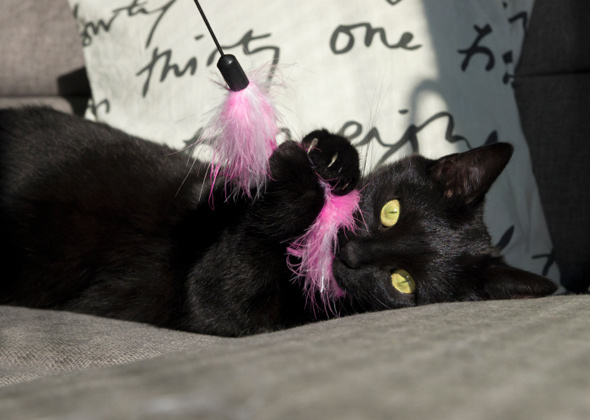 cat playing with feather toy thinkstock 185869647 590lc111714 jpg
