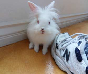 bunny and shoe