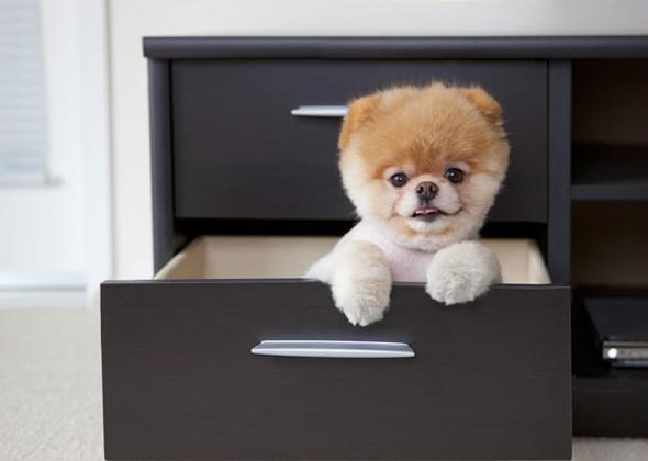 Boo The World S Cutest Dog