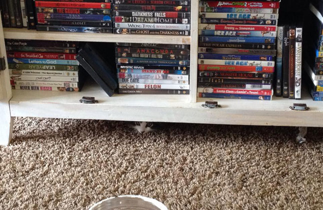 Hide and Seek Cat Under DVDs