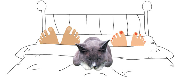 Sleeping in bed with pets graphic