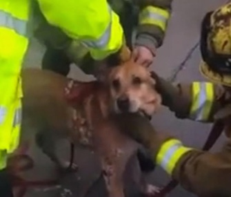 Los Angeles County firefighters freed this dog from a 6-inch gap between two walls.