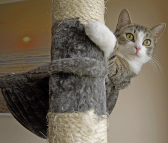Cat on scratching post