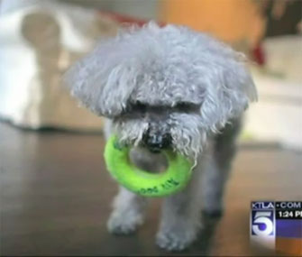 Chichi in a 2010 KTLA video.