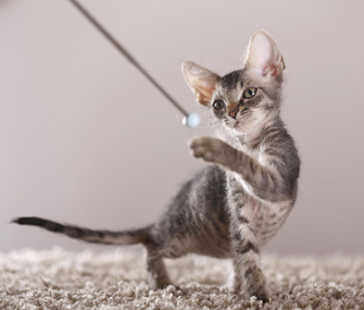 Kitten target training