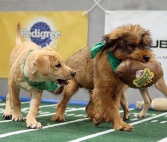 Star, right, ran away with the game, leading Team Ruff to a 70-44 victory over Team Fluff.