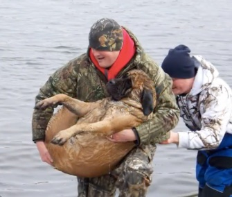 Two fisherman pulled a huge Bull Mastiff from a frigid river in Iowa on Sunday.