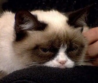 Tardar Sauce, a.k.a. Grumpy Cat, is donating part of the proceeds of merchandise with her scowl to an animal shelter.