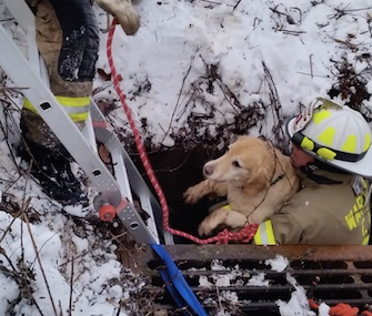 Bailey, a Labrador Retriever mix, was rescued after falling 8 feet into a storm drain.