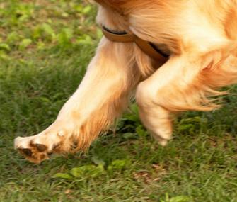 Dog's Knees