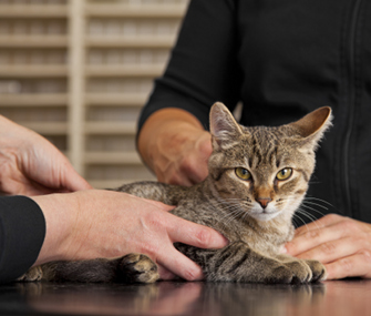 Vet Teaching Owner to Check Vital Signs