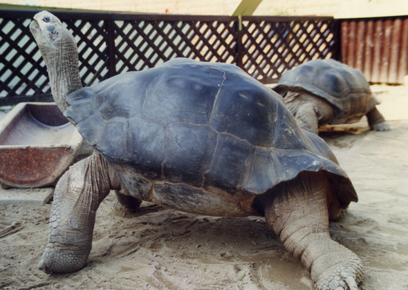 7 Animals That Live Long Lives