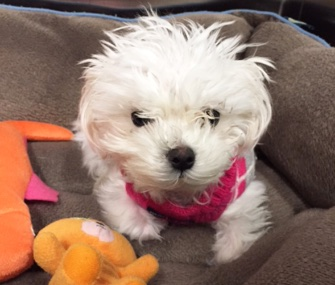 A puppy who suffered terrible abuse has a happy new home.