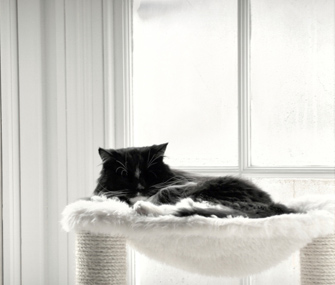 how to create a cat-friendly apartment