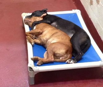 Kyra and Delaware have become inseparable at Fulton Animal Services in Atlanta.