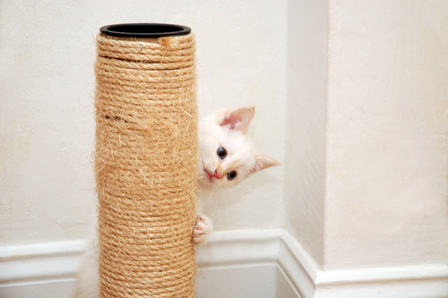 Kitten and scratching post