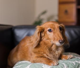 dog slipped disc treatment